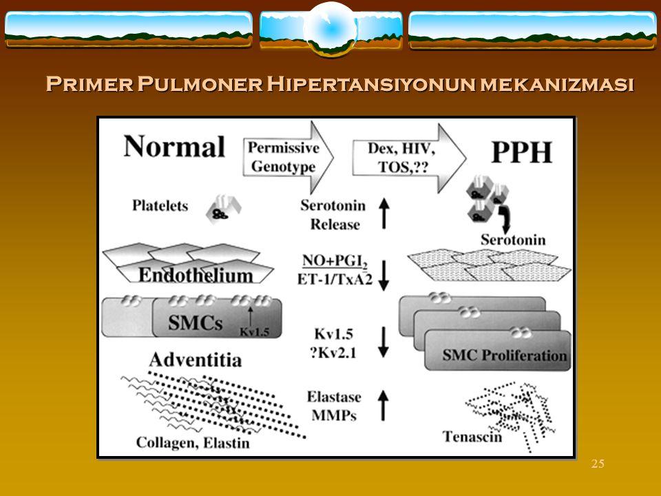 25 Primer Pulmoner Hipertansiyonun mekanizması