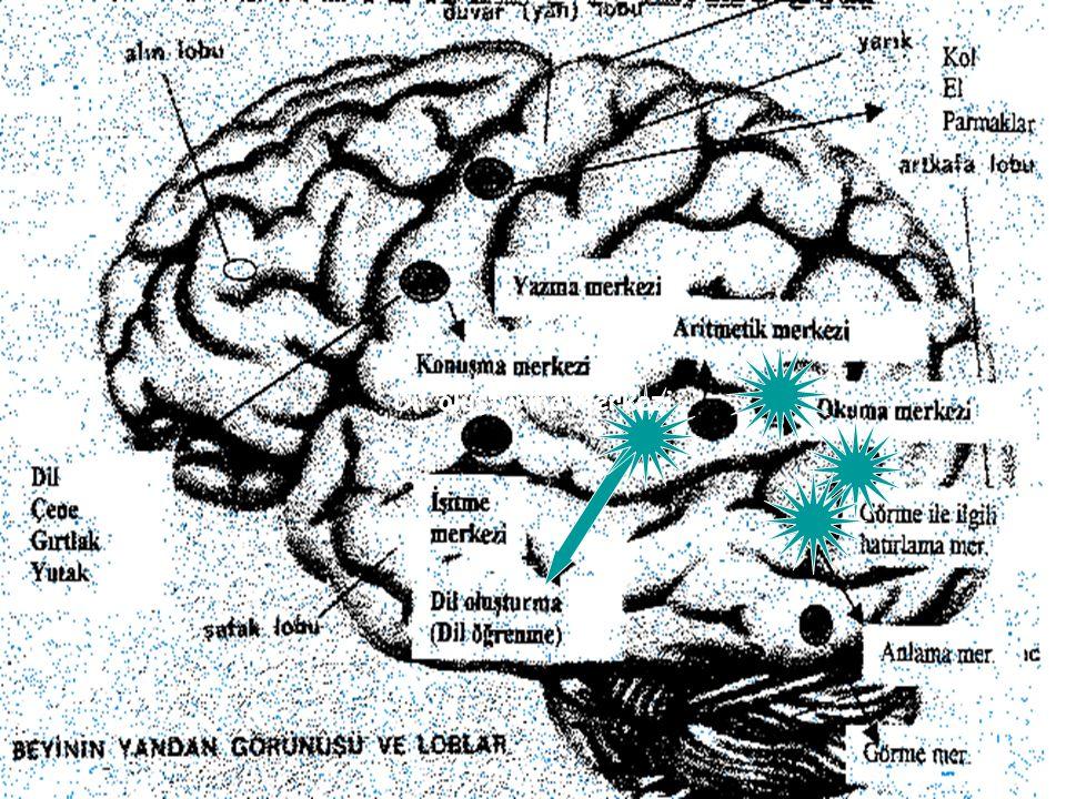 Yabancı dil öğretiminde; 1. Görme ile ilgili hatırlama merkezi, 2. İşitilen sözleri hatırlama merkezi, 3. Yazılı kelimeleri görme ile ilgili hatırlama