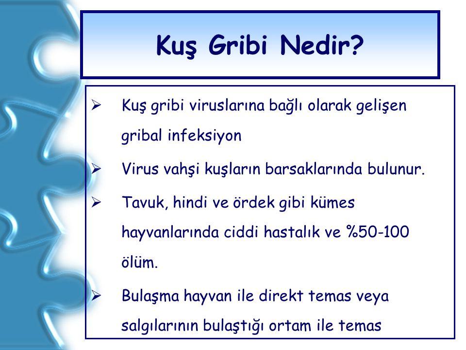 Kuş Gribi Nedir?  Kuş gribi viruslarına bağlı olarak gelişen gribal infeksiyon  Virus vahşi kuşların barsaklarında bulunur.  Tavuk, hindi ve ördek