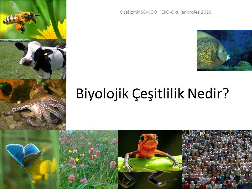 Biyolojik Çeşitlilik Nedir? Özel İzmir SEV İÖO – EKO-Okullar projesi 2010