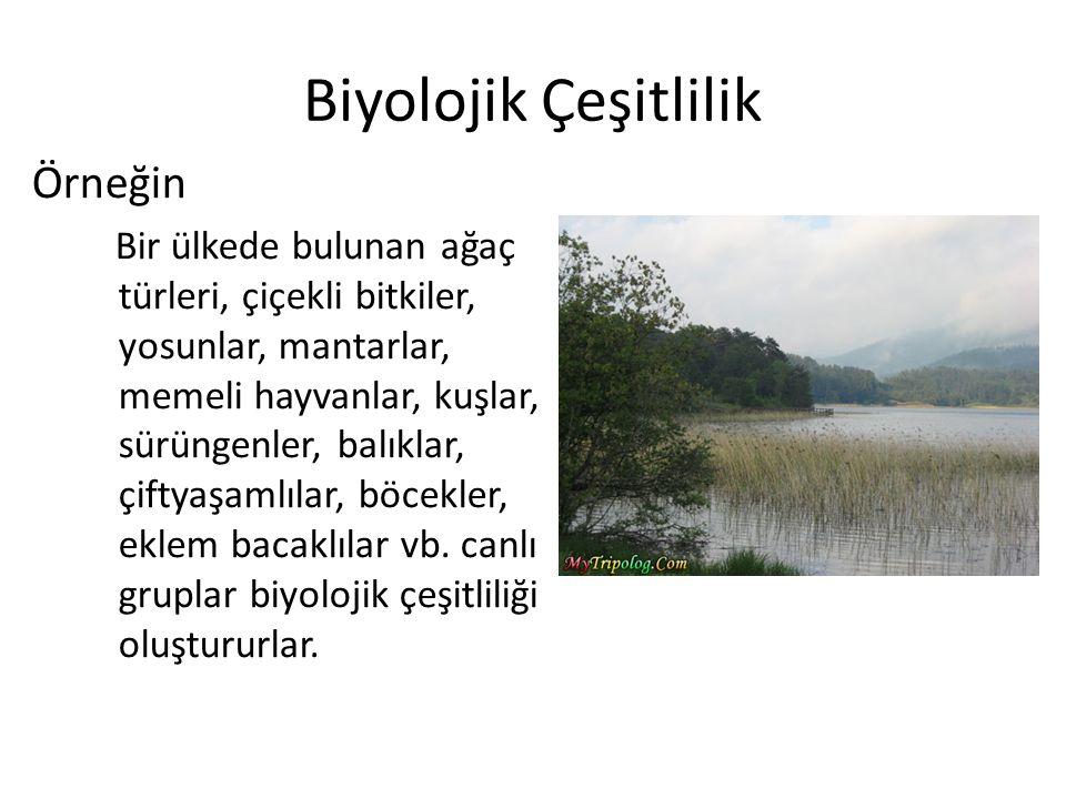 Biyolojik Çeşitlilik Örneğin Bir ülkede bulunan ağaç türleri, çiçekli bitkiler, yosunlar, mantarlar, memeli hayvanlar, kuşlar, sürüngenler, balıklar,
