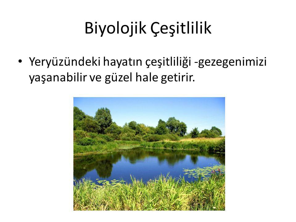 Biyolojik Çeşitlilik • Yeryüzündeki hayatın çeşitliliği -gezegenimizi yaşanabilir ve güzel hale getirir.