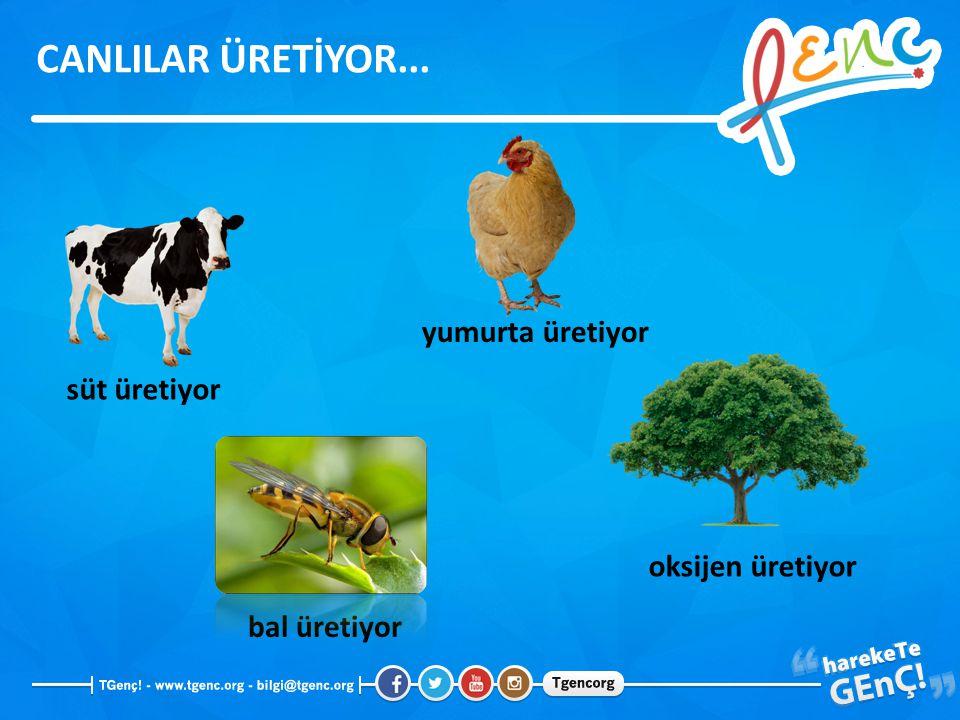 süt üretiyor bal üretiyor yumurta üretiyor oksijen üretiyor CANLILAR ÜRETİYOR...