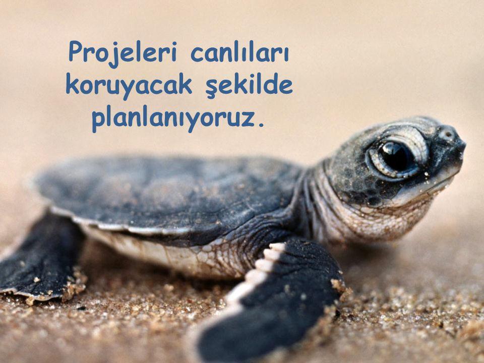 Projeleri canlıları koruyacak şekilde planlanıyoruz.