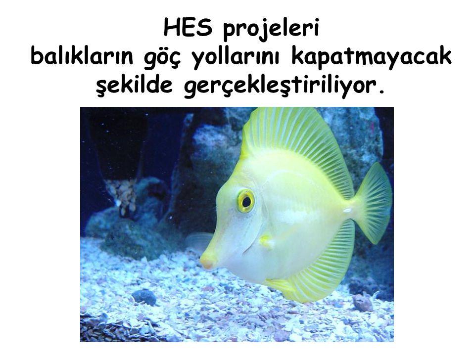 HES projeleri balıkların göç yollarını kapatmayacak şekilde gerçekleştiriliyor.