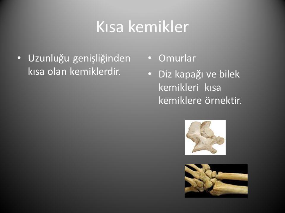 Kısa kemikler • Uzunluğu genişliğinden kısa olan kemiklerdir.