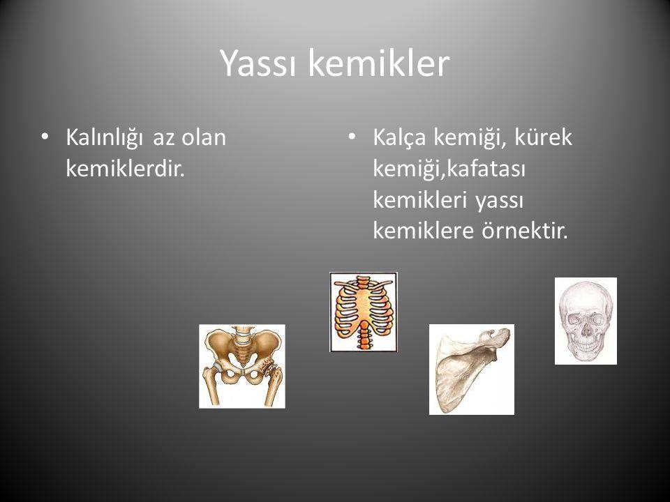 Yassı kemikler • Kalınlığı az olan kemiklerdir.