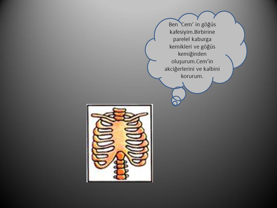 Ben Cem' in göğüs kafesiyim.Birbirine parelel kaburga kemikleri ve göğüs kemiğinden oluşurum.Cem'in akciğerlerini ve kalbini korurum.