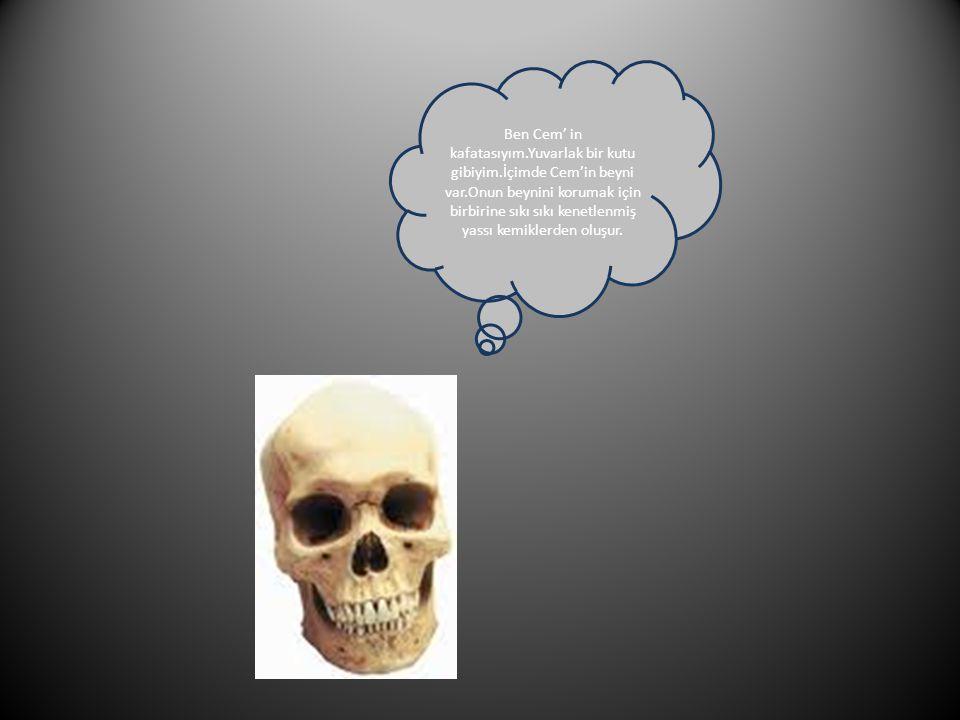 Ben Cem' in kafatasıyım.Yuvarlak bir kutu gibiyim.İçimde Cem'in beyni var.Onun beynini korumak için birbirine sıkı sıkı kenetlenmiş yassı kemiklerden oluşur.