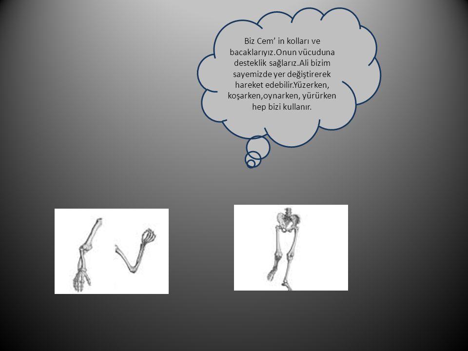 Biz Cem' in kolları ve bacaklarıyız.Onun vücuduna desteklik sağlarız.Ali bizim sayemizde yer değiştirerek hareket edebilir.Yüzerken, koşarken,oynarken, yürürken hep bizi kullanır.