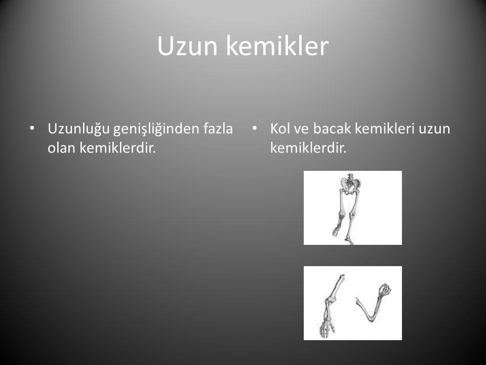 Uzun kemikler • Uzunluğu genişliğinden fazla olan kemiklerdir.