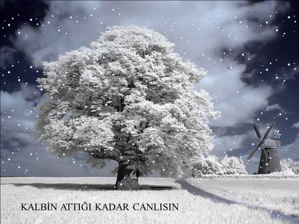 KANATLARIN ÇIRPINDIĞI KADAR HAFİF…..