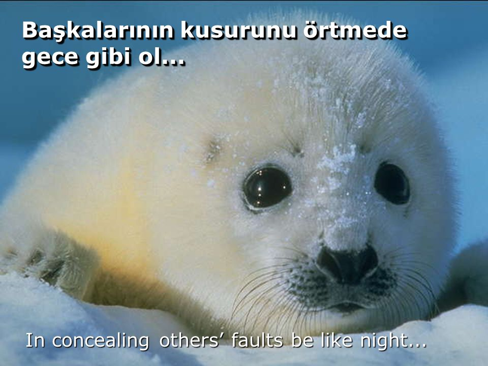 56 Başkalarının kusurunu örtmede gece gibi ol... In concealing others' faults be like night...