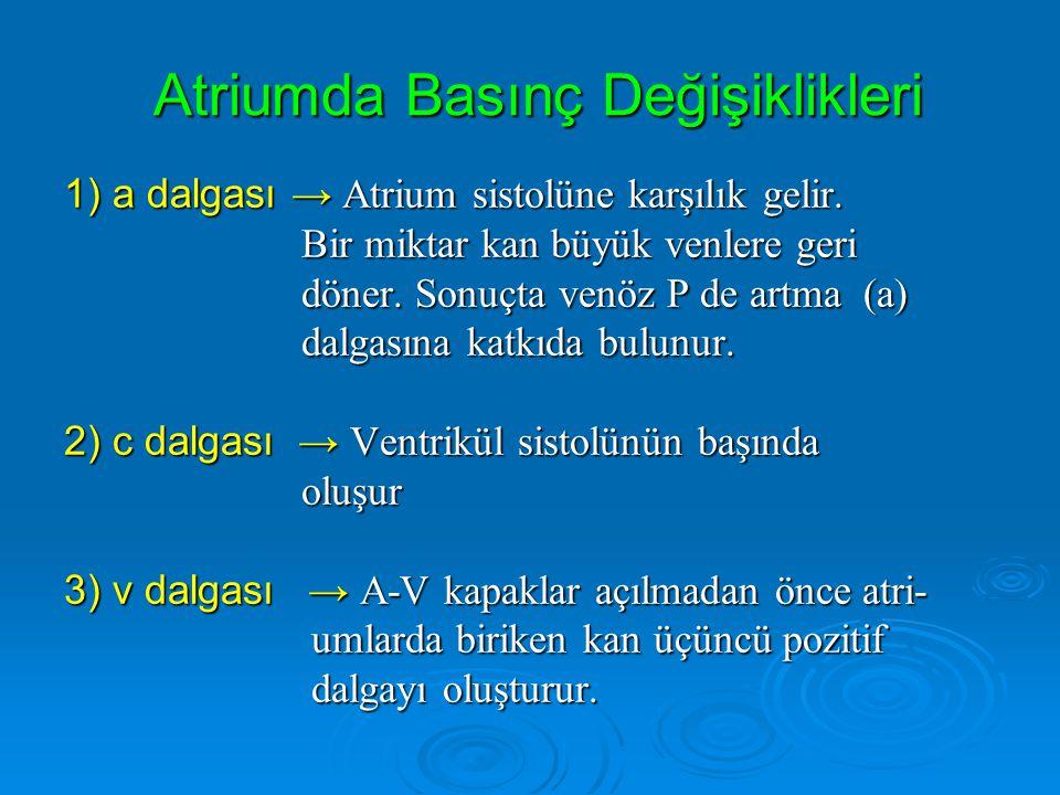 Atriumda Basınç Değişiklikleri 1) a dalgası → Atrium sistolüne karşılık gelir. Bir miktar kan büyük venlere geri Bir miktar kan büyük venlere geri dön