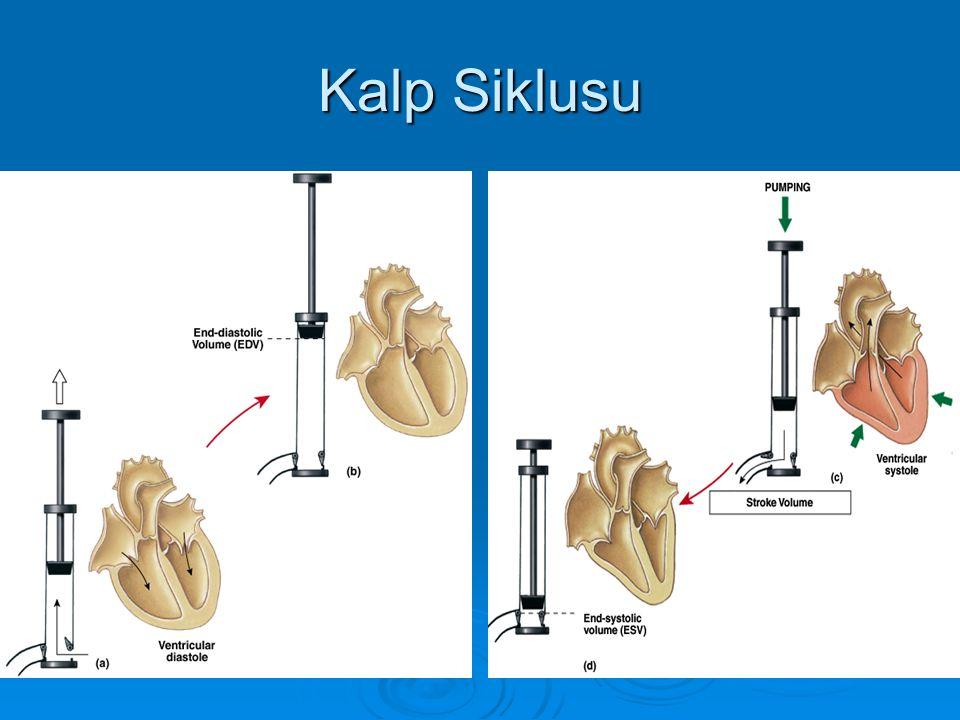 Kalp Siklusu