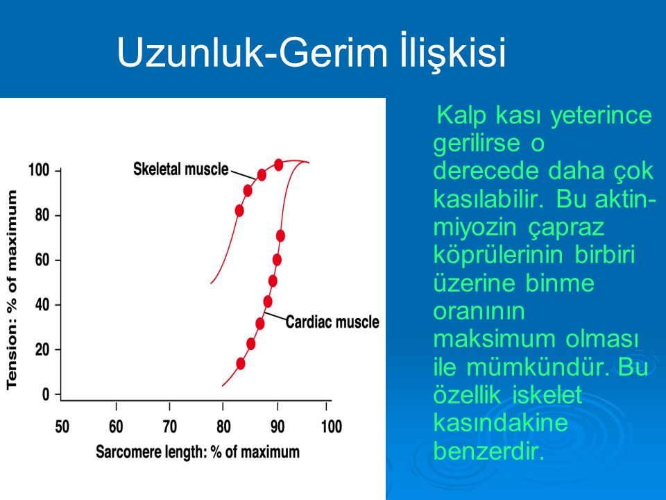 Uzunluk-Gerim İlişkisi Kalp kası yeterince gerilirse o derecede daha çok kasılabilir. Bu aktin- miyozin çapraz köprülerinin birbiri üzerine binme oran