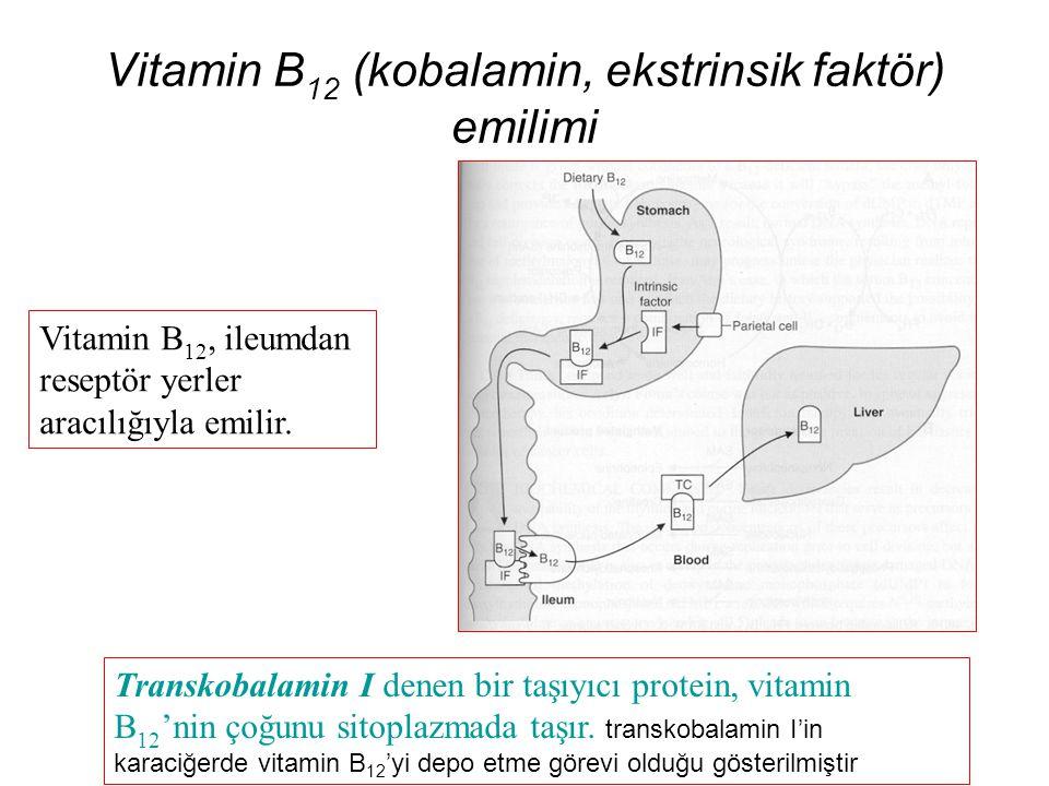 Vitamin B 12 (kobalamin, ekstrinsik faktör) emilimi Vitamin B 12, ileumdan reseptör yerler aracılığıyla emilir. Transkobalamin I denen bir taşıyıcı pr