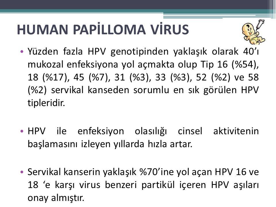HUMAN PAPİLLOMA VİRUS • Yüzden fazla HPV genotipinden yaklaşık olarak 40'ı mukozal enfeksiyona yol açmakta olup Tip 16 (%54), 18 (%17), 45 (%7), 31 (%