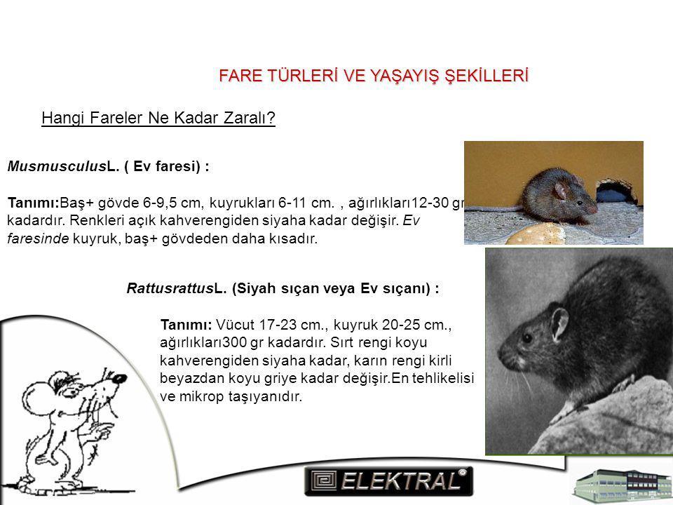 FARE TÜRLERİ VE YAŞAYIŞ ŞEKİLLERİ Hangi Fareler Ne Kadar Zaralı? MusmusculusL. ( Ev faresi) : Tanımı:Baş+ gövde 6-9,5 cm, kuyrukları 6-11 cm., ağırlık