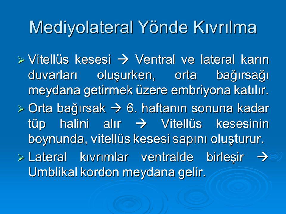Mediyolateral Yönde Kıvrılma  Vitellüs kesesi  Ventral ve lateral karın duvarları oluşurken, orta bağırsağı meydana getirmek üzere embriyona katılır