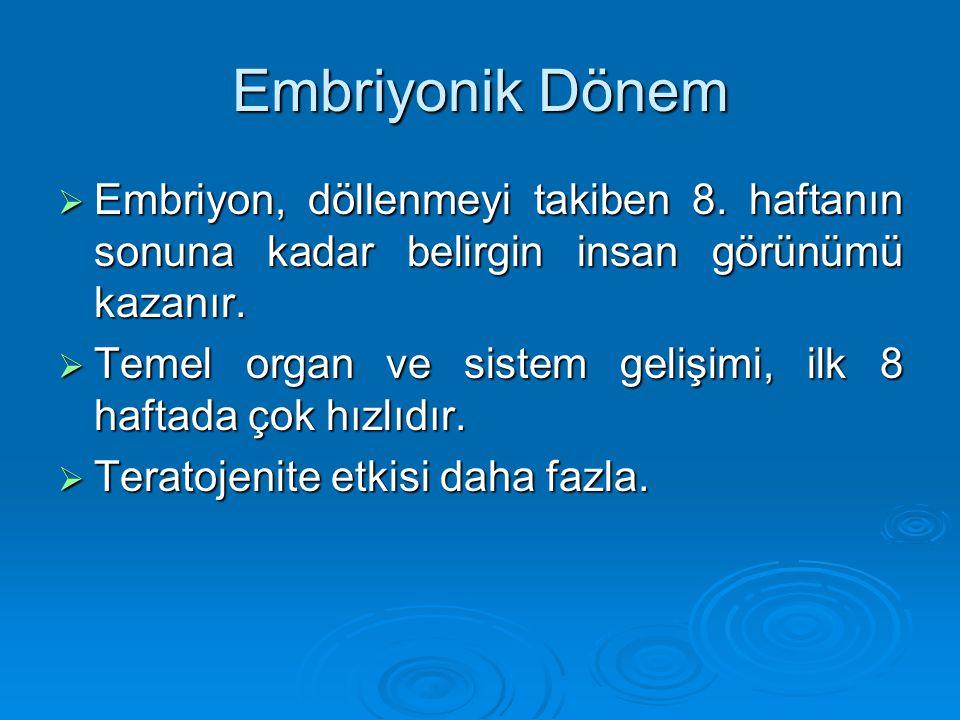 Embiyonik Kıvrımlar  Bu dönemde  Endoderm daha ileri seviyede farklılaşır.