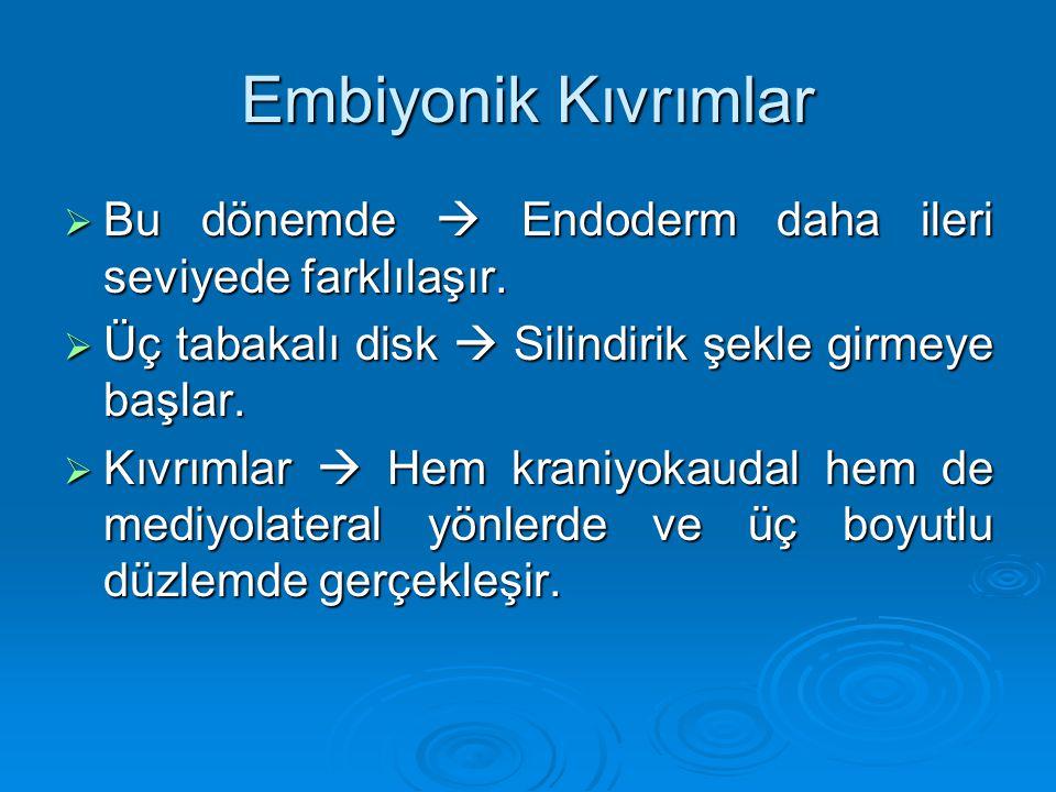 Embiyonik Kıvrımlar  Bu dönemde  Endoderm daha ileri seviyede farklılaşır.  Üç tabakalı disk  Silindirik şekle girmeye başlar.  Kıvrımlar  Hem k