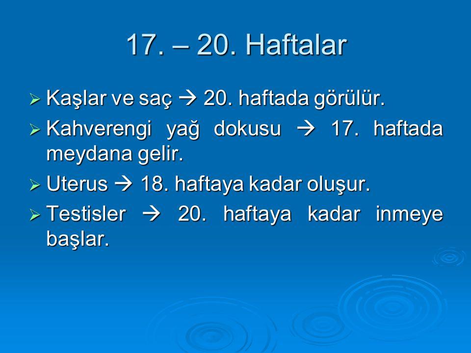 17. – 20. Haftalar  Kaşlar ve saç  20. haftada görülür.  Kahverengi yağ dokusu  17. haftada meydana gelir.  Uterus  18. haftaya kadar oluşur. 