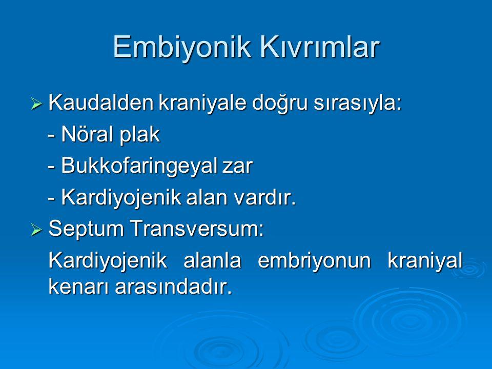Embiyonik Kıvrımlar  Kaudalden kraniyale doğru sırasıyla: - Nöral plak - Nöral plak - Bukkofaringeyal zar - Bukkofaringeyal zar - Kardiyojenik alan v