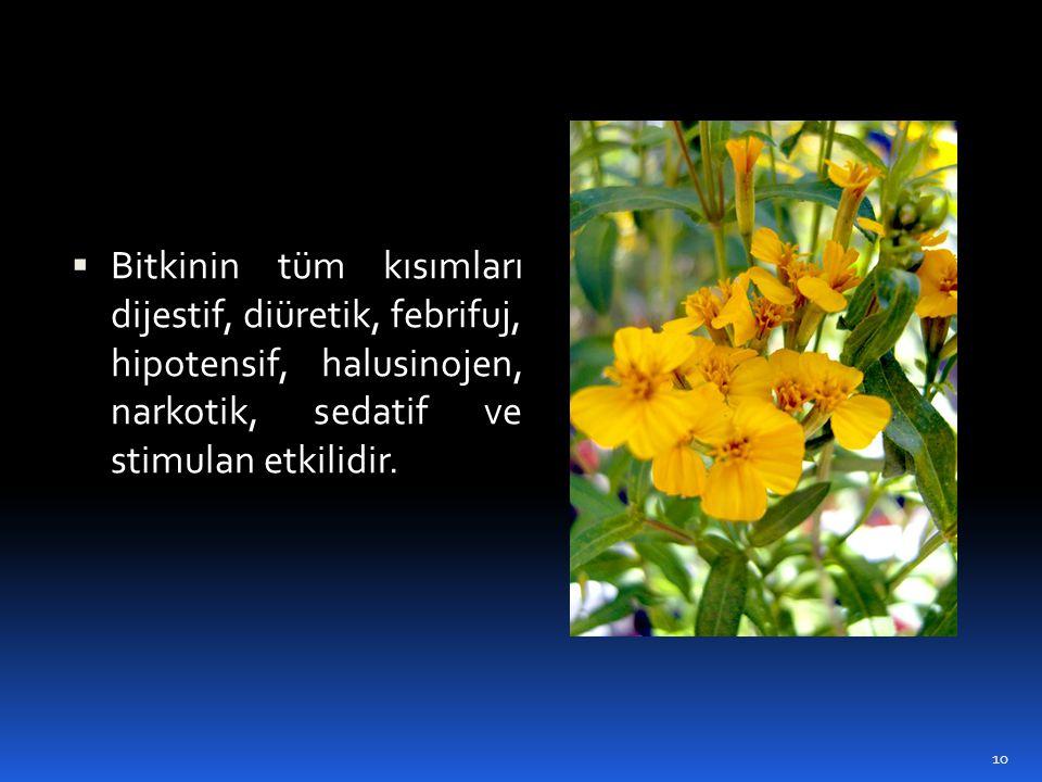  Bitkinin tüm kısımları dijestif, diüretik, febrifuj, hipotensif, halusinojen, narkotik, sedatif ve stimulan etkilidir. 10