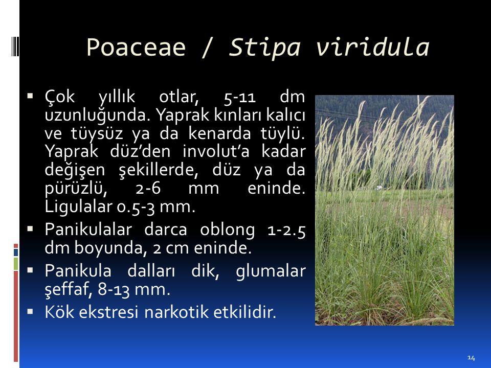 Poaceae / Stipa viridula  Çok yıllık otlar, 5-11 dm uzunluğunda. Yaprak kınları kalıcı ve tüysüz ya da kenarda tüylü. Yaprak düz'den involut'a kadar