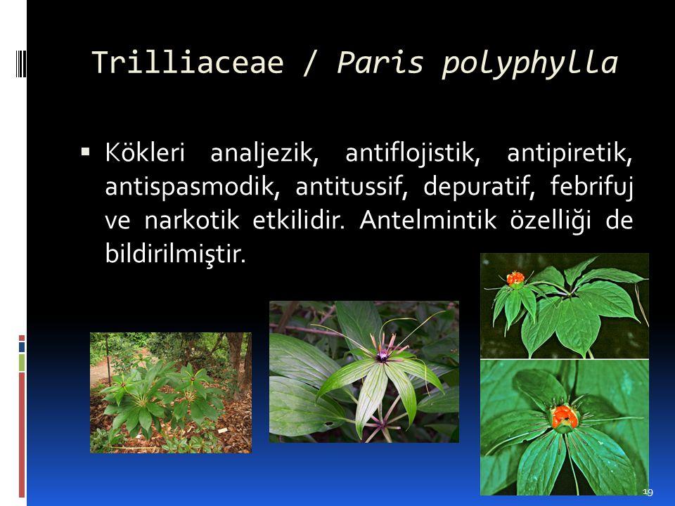 Trilliaceae / Paris polyphylla  Kökleri analjezik, antiflojistik, antipiretik, antispasmodik, antitussif, depuratif, febrifuj ve narkotik etkilidir.