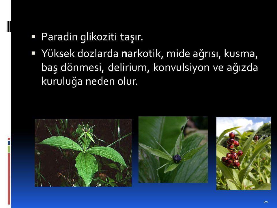  Paradin glikoziti taşır.  Yüksek dozlarda narkotik, mide ağrısı, kusma, baş dönmesi, delirium, konvulsiyon ve ağızda kuruluğa neden olur. 21