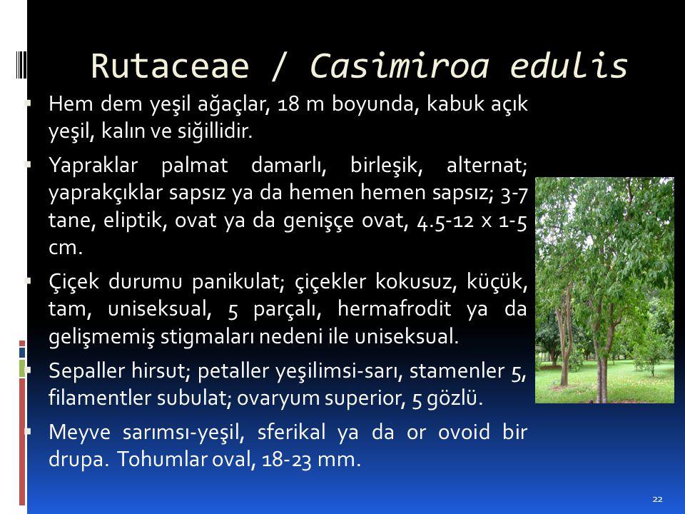 Rutaceae / Casimiroa edulis  Hem dem yeşil ağaçlar, 18 m boyunda, kabuk açık yeşil, kalın ve siğillidir.  Yapraklar palmat damarlı, birleşik, altern