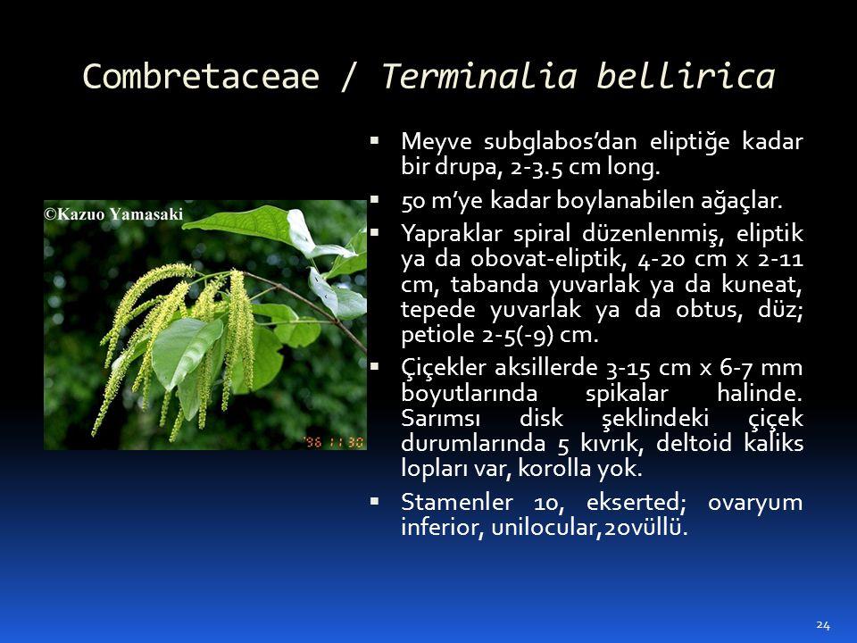 Combretaceae / Terminalia bellirica  Meyve subglabos'dan eliptiğe kadar bir drupa, 2-3.5 cm long.  50 m'ye kadar boylanabilen ağaçlar.  Yapraklar s