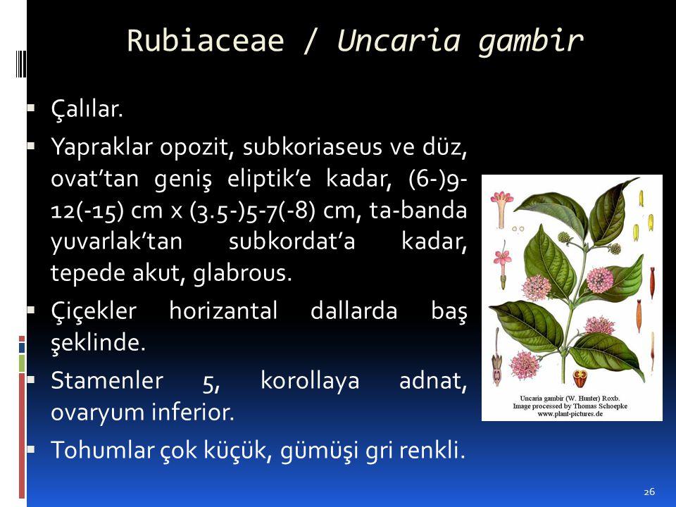 Rubiaceae / Uncaria gambir  Çalılar.  Yapraklar opozit, subkoriaseus ve düz, ovat'tan geniş eliptik'e kadar, (6-)9- 12(-15) cm x (3.5-)5-7(-8) cm, t