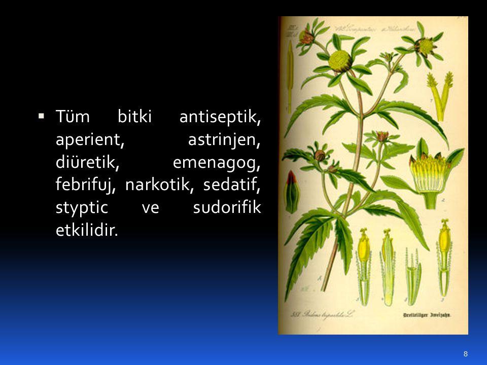  Tüm bitki antiseptik, aperient, astrinjen, diüretik, emenagog, febrifuj, narkotik, sedatif, styptic ve sudorifik etkilidir. 8