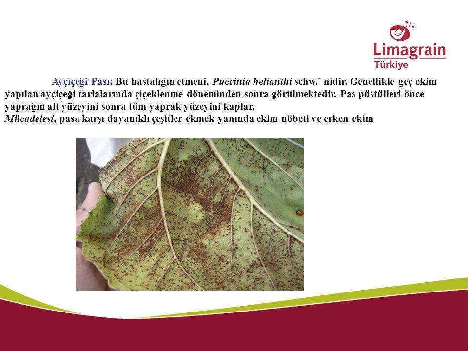 Ayçiçeği Pası: Bu hastalığın etmeni, Puccinia helianthi schw.' nidir. Genellikle geç ekim yapılan ayçiçeği tarlalarında çiçeklenme döneminden sonra gö