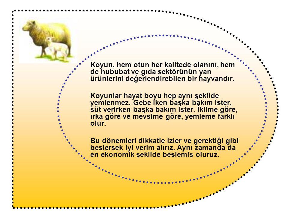 Koyun, hem otun her kalitede olanını, hem de hububat ve gıda sektörünün yan ürünlerini değerlendirebilen bir hayvandır. Koyunlar hayat boyu hep aynı ş