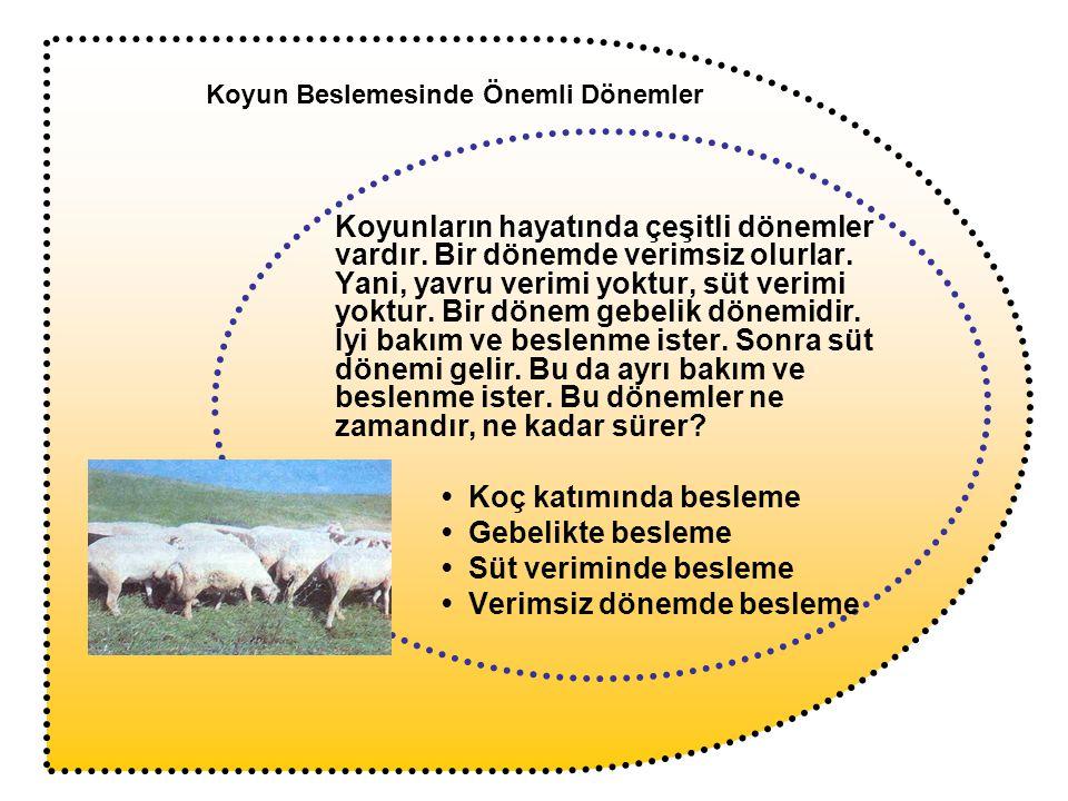 Koyunların hayatında çeşitli dönemler vardır. Bir dönemde verimsiz olurlar. Yani, yavru verimi yoktur, süt verimi yoktur. Bir dönem gebelik dönemidir.