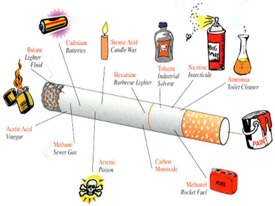 SİGARA VE KEMİKLER Sigara içenlerin kemikleri yoğunluk kaybeder; kırıklar daha kolay olur ve iyileşme %80 e kadar daha yavaş olur