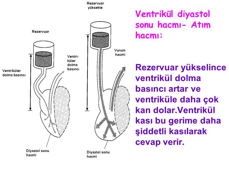 Ventrikül diyastol sonu hacmı- Atım hacmı: Rezervuar yükselince ventrikül dolma basıncı artar ve ventriküle daha çok kan dolar.Ventrikül kası bu gerim