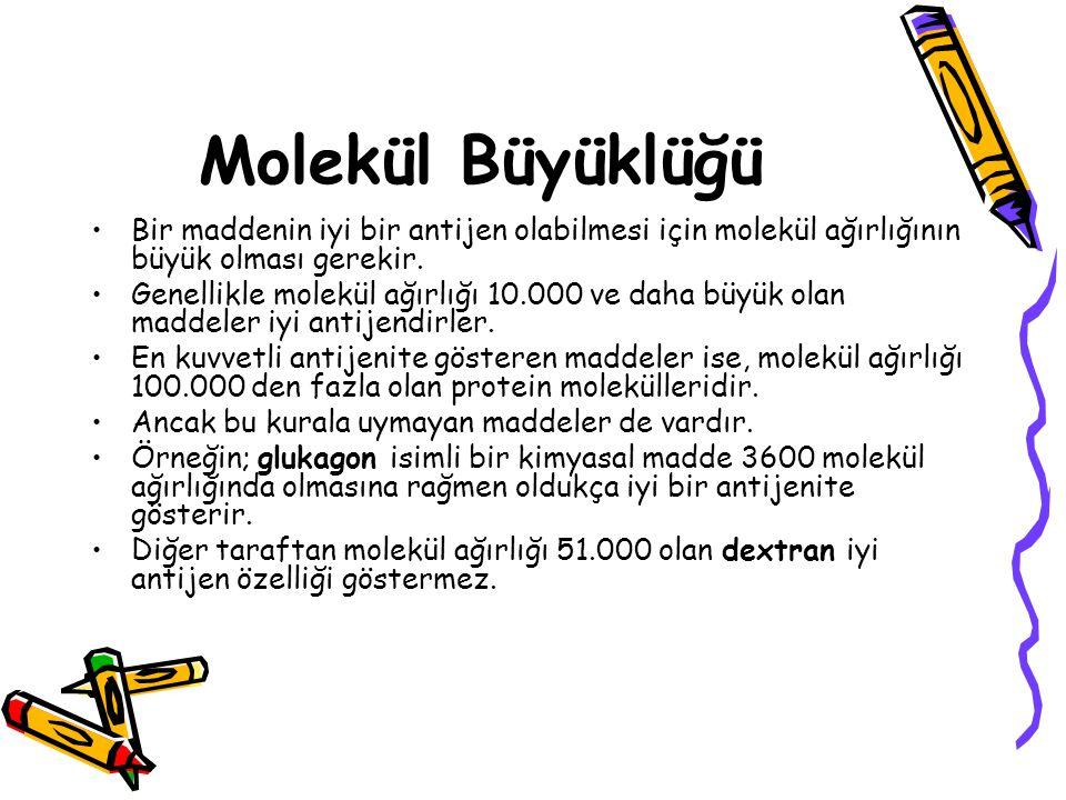 Molekül Büyüklüğü •Bir maddenin iyi bir antijen olabilmesi için molekül ağırlığının büyük olması gerekir. •Genellikle molekül ağırlığı 10.000 ve daha