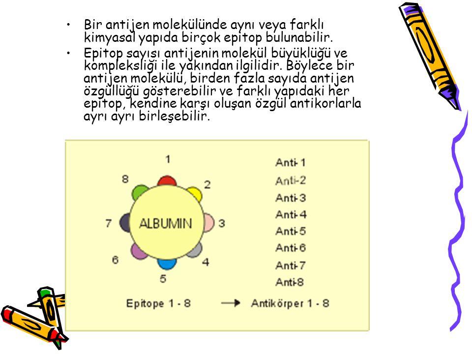 •Bir antijen molekülünde aynı veya farklı kimyasal yapıda birçok epitop bulunabilir. •Epitop sayısı antijenin molekül büyüklüğü ve kompleksliği ile ya