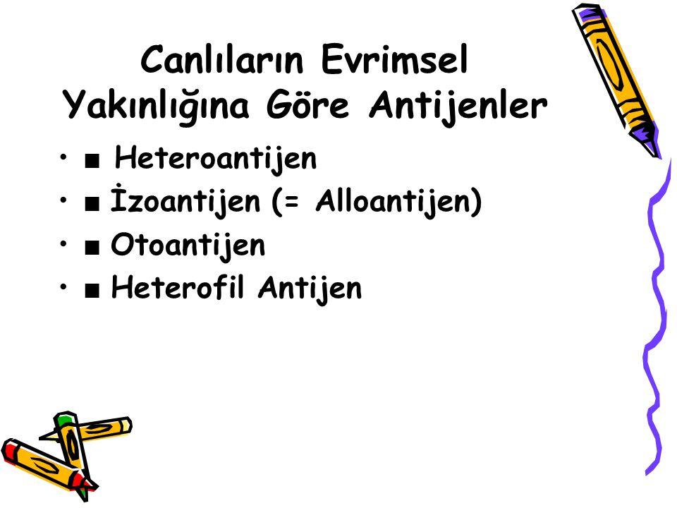 Canlıların Evrimsel Yakınlığına Göre Antijenler • ■ Heteroantijen • ■ İzoantijen (= Alloantijen) • ■ Otoantijen • ■ Heterofil Antijen