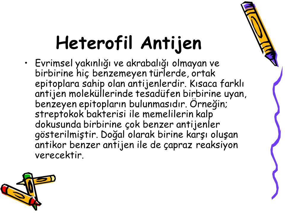Heterofil Antijen •Evrimsel yakınlığı ve akrabalığı olmayan ve birbirine hiç benzemeyen türlerde, ortak epitoplara sahip olan antijenlerdir. Kısaca fa