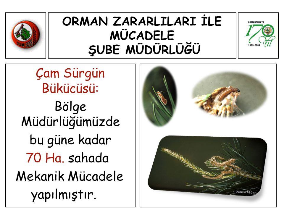 ORMAN ZARARLILARI İLE MÜCADELE ŞUBE MÜDÜRLÜĞÜ Çam Sürgün Bükücüsü: Bölge Müdürlüğümüzde bu güne kadar 70 Ha.