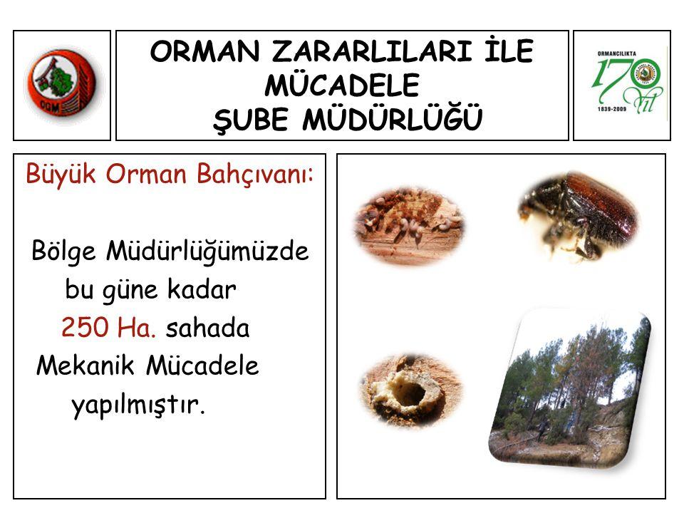 ORMAN ZARARLILARI İLE MÜCADELE ŞUBE MÜDÜRLÜĞÜ Büyük Orman Bahçıvanı: Bölge Müdürlüğümüzde bu güne kadar 250 Ha.