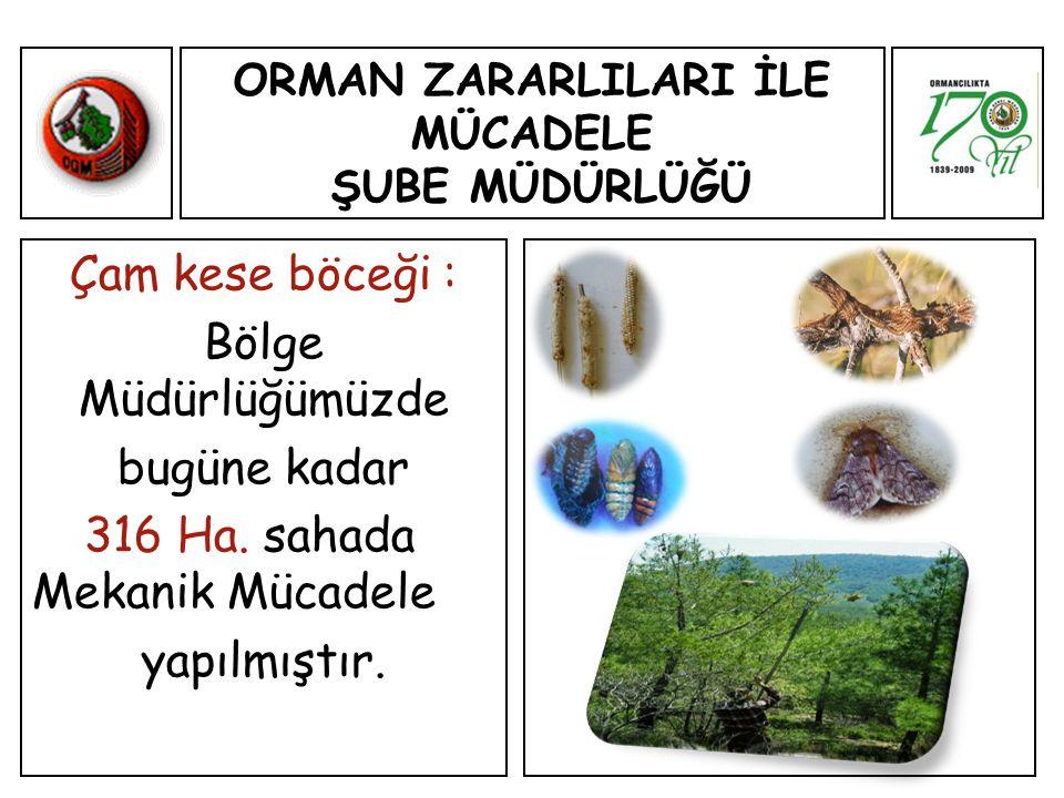 ORMAN ZARARLILARI İLE MÜCADELE ŞUBE MÜDÜRLÜĞÜ Çam kese böceği : Bölge Müdürlüğümüzde bugüne kadar 316 Ha.