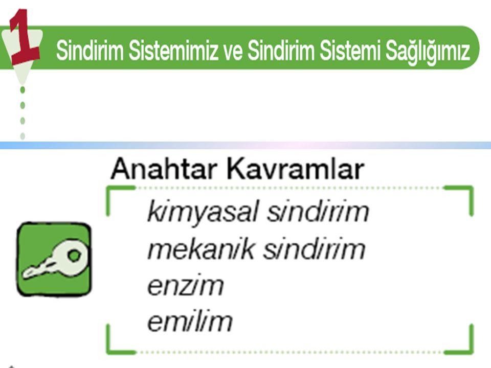 Pınar iştahla sandviçinden kocaman bir parça ısırdı.Öyle anlaşılıyordu ki Pınar' ın en sevdiği yiyecek sandviç.