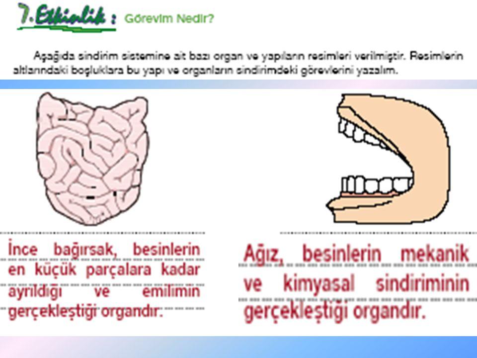 •P•Peki, hücrelerimize kadar taşınan bu besin içeriklerinin vücudumuzda hangi olaylar için kullanıldığını biliyor musunuz.